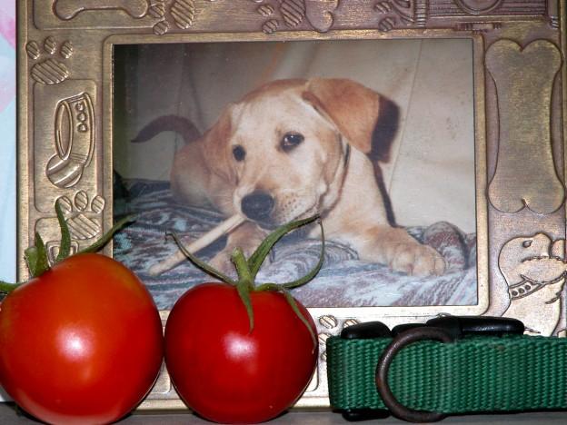 Fido Tomatoes