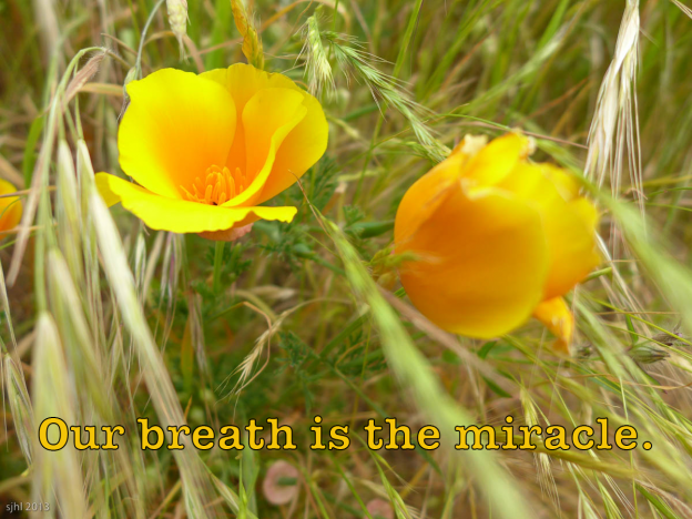 Our breath is the miracle.